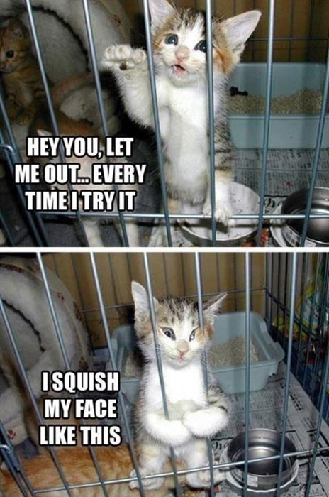 Cats,crate,escape,kitten,squish
