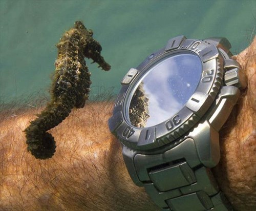 cute,time,seahorses,watch