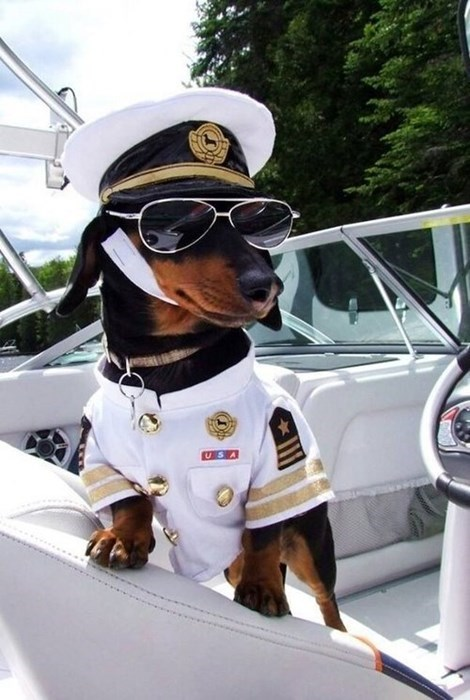 fashion,boat,dogs,pets