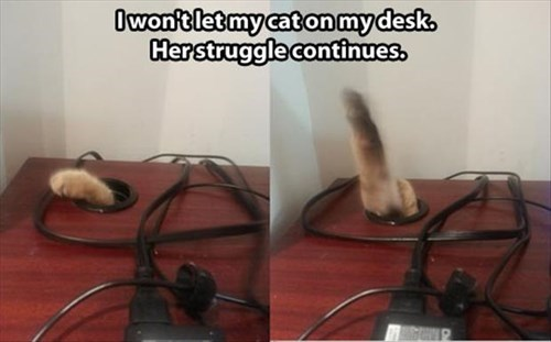 rules,desk,The Man,struggle,Cats,funny