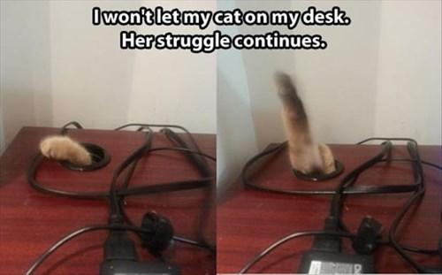 rules desk struggle Cats funny - 7960651008