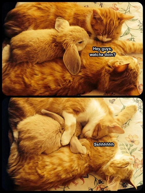 bunnies snuggle cute friends Cats - 7960654080