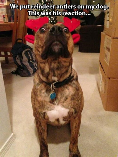 antlers cute dogs christmas nose reindeer