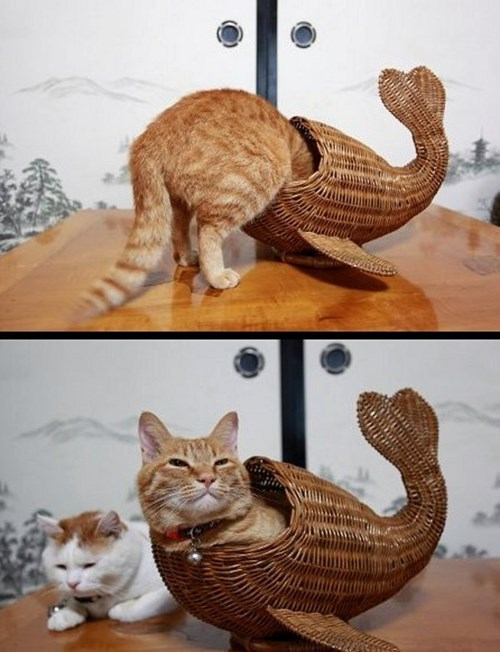 basket Cats cute fish feed - 7960660224