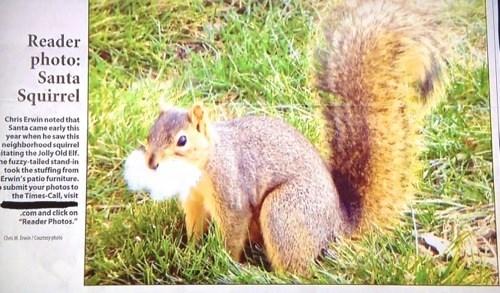 animals christmas photography timing santa squirrel