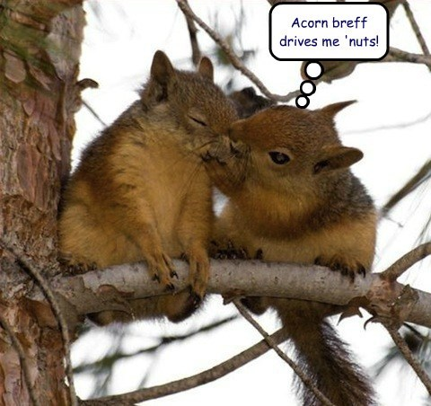 cute nuts squirrels - 7960806400
