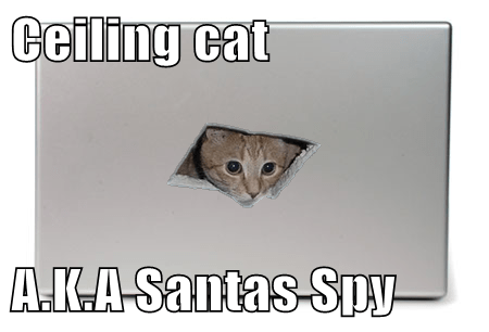 Cats ceiling cat christmas santa - 7960813824