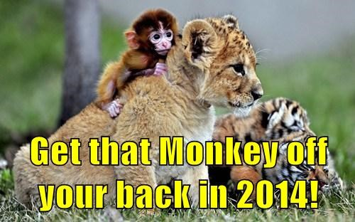 2014 cute lion monkey - 7961387008