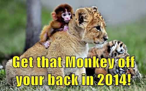 cute lion monkey - 7961387008