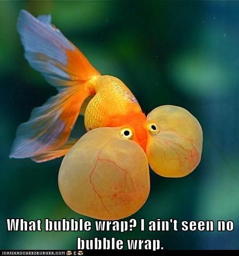 bubble wrap fish funny - 7961599232