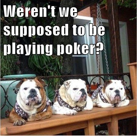 bulldogs dogs funny poker