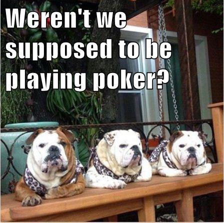 bulldogs dogs funny poker - 7961621504