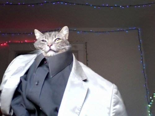 fashion Cats - 7961730560