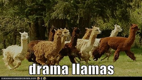 run suitcase llamas alpacas