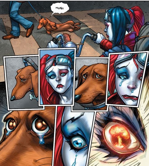 dogs,Harley Quinn,of the page