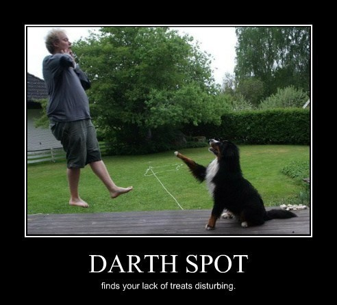 dogs funny star wars sith - 7961874944