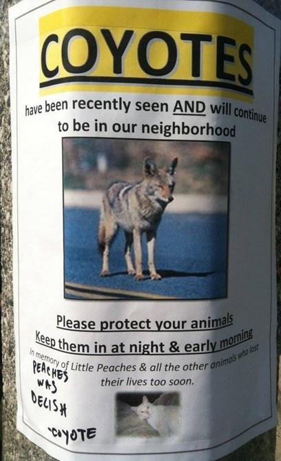 Cats coyotes pets - 7961883904