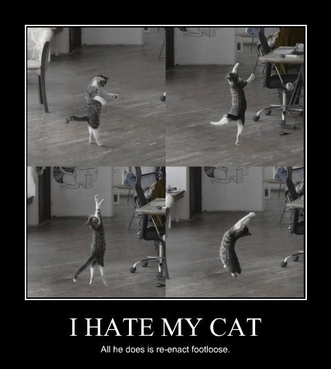 cat,footloose,funny,wtf