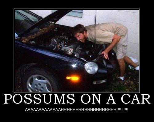 car possums funny wtf - 7961940736
