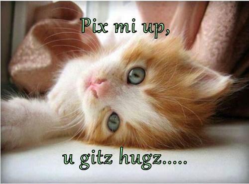Cats cute hugs kitten - 7961949952