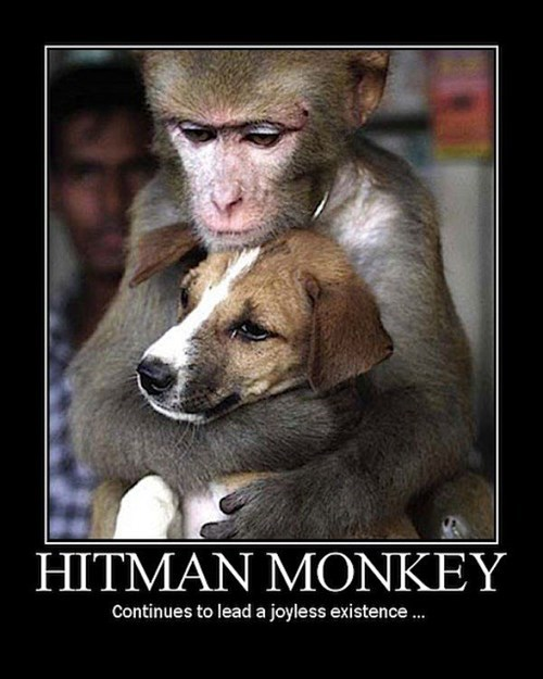 assassin,funny,hitman,monkey