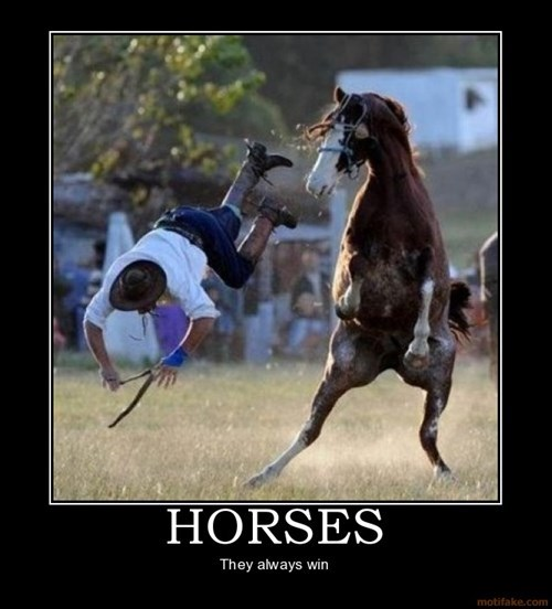 horse bucked humans funny wins - 7961981184