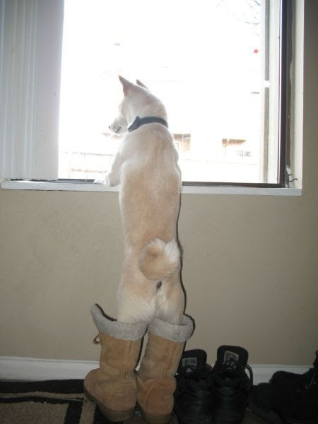 cute dogs boots snow outside - 7962201088