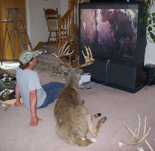 animals,hunting,TV