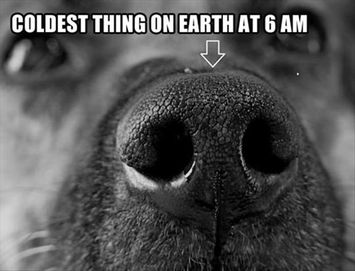 dogs,cold,funny,nose,sleeping