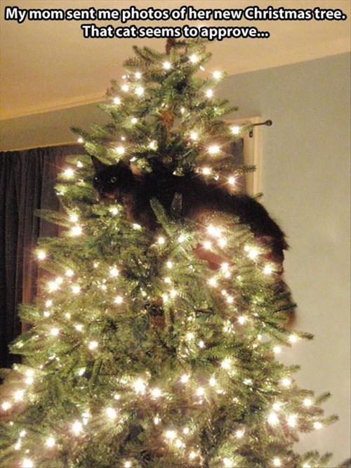 Cats christmas climb funny trees