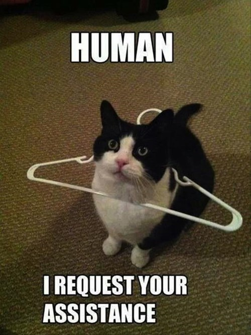 Cats hanger help funny puns - 7962244864