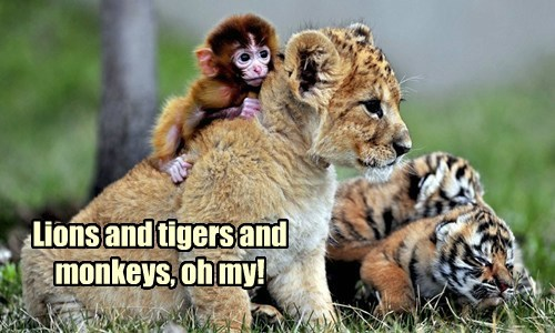 Lions and tigers and monkeys, oh my!