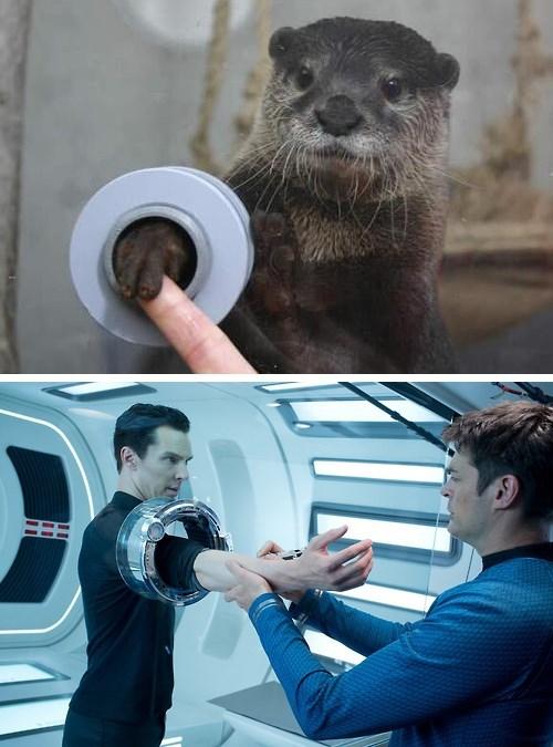 benedict cumberbatch Star Trek otter - 7962313728