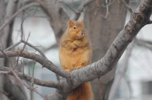 Alright!  Who's the squirrel that stole my nuts?