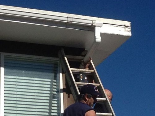 genius,ladder,repairs