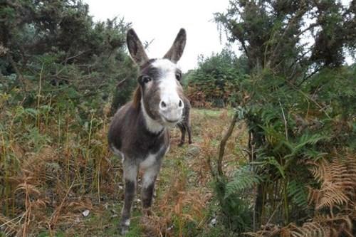 donkeys photobomb