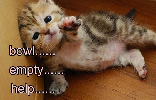 cute,empty,help,kitten
