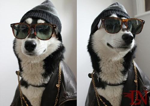fashion,dogs