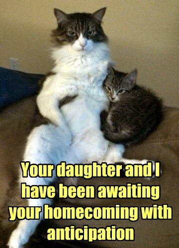 Cats cute dad kitten mom waiting - 7963517184