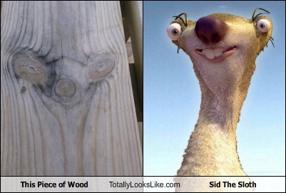 ice age,totally looks like,sid the sloth,wood