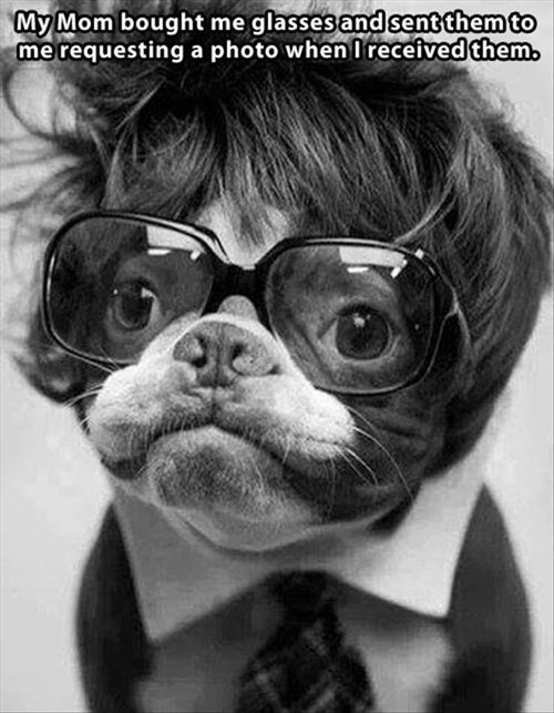 dogs,glasses,funny,mom,pictures,pranks