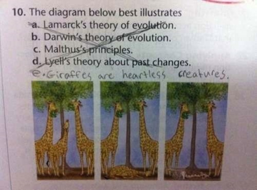 Giraffe - 10. The diagram below best illustrates a. Lamarck's theory of evolution. b. Darwin's theory of evolution. c. Malthus's principles. d. Lyell's theory about past changes. e.Giraffes are heartless creatufes.