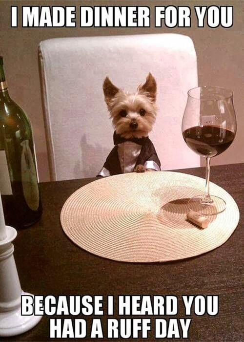 dogs,tuxedo,puns,cute,wine,dinner