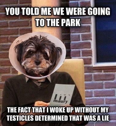 maury Memes pets - 7964136960