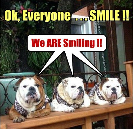 dogs smiling bulldogs tough - 7964510720