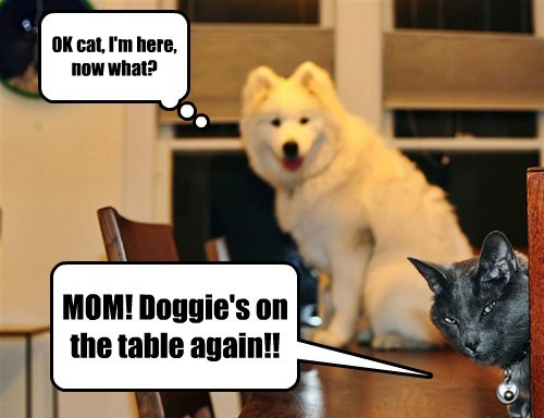 OK cat, I'm here, now what? MOM! Doggie's on the table again!!
