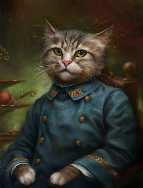 Cats,uniform,wtf