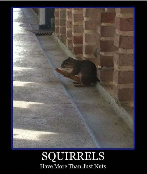 funny nuts hot dog wtf squirrel - 7965672448