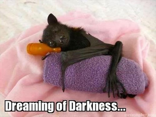 cute,darkness,bats,sleeping