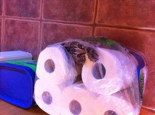 Cats,funny,paper towels